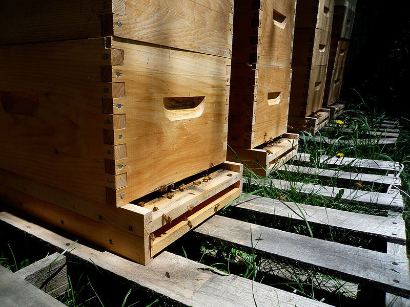 Bee boxes on a pallet, courtesy Flickr.